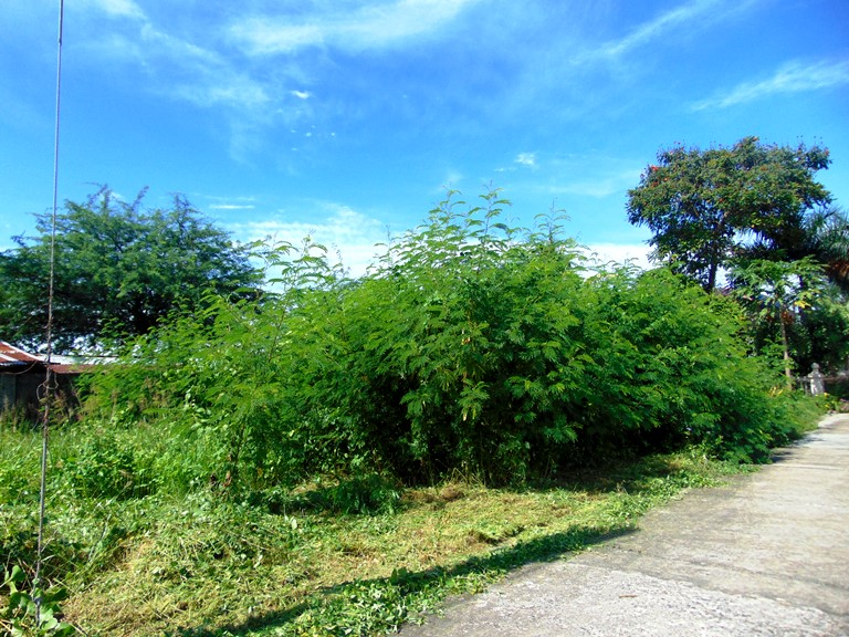residential-lot-for-sale-in-minglanilla-cebu